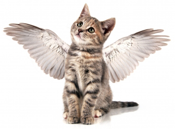 kitten-with-angel-wings